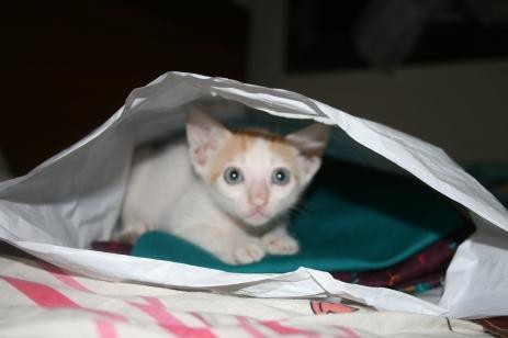 Sharukh beutachtet meinen neuen Salwar Kamiz.